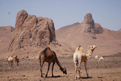 desierto-algeria.jpg
