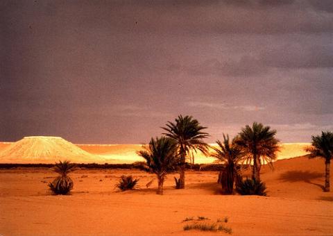 sahara-palmeras.jpg